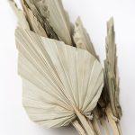 Ramo hojas de palma
