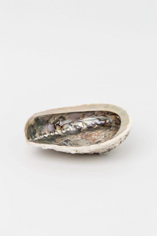 Concha de abalón grisacea